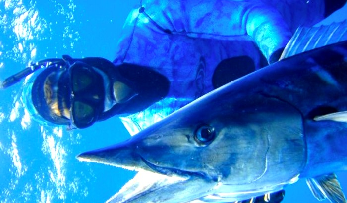Free Diving Wahoo
